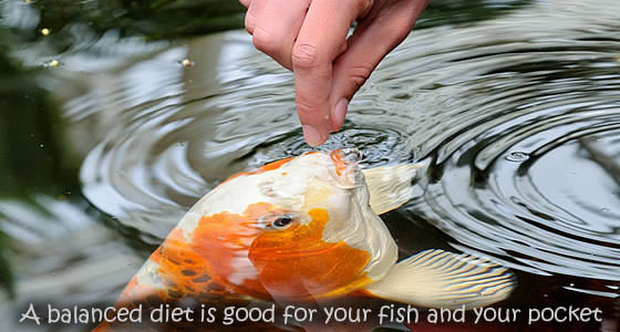 Garden Pond Feeding Advice