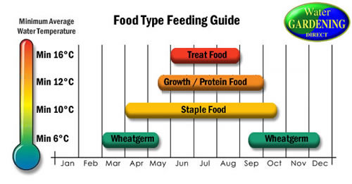 How and when to feed your fish water gardening direct for Fish feeding chart