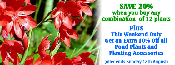 Pond Plant Multi Buy Special Offer