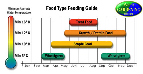 Food Feeding Guide